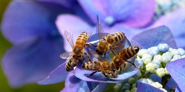 Wydruki z wosku pszczelego
